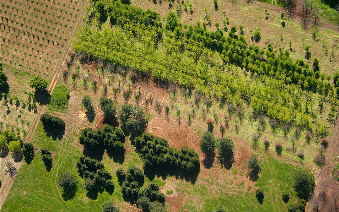 Il WebGIS nelle aziende agricole